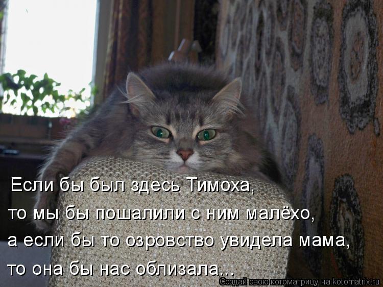 Котоматрица: Если бы был здесь Тимоха, то мы бы пошалили с ним малёхо, а если бы то озровство увидела мама, то она бы нас облизала...