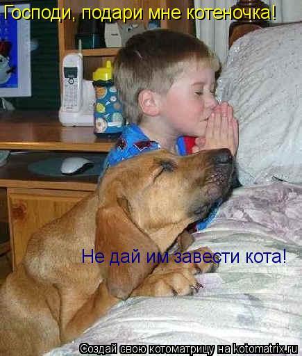 Котоматрица: Господи, подари мне котеночка! Не дай им завести кота!