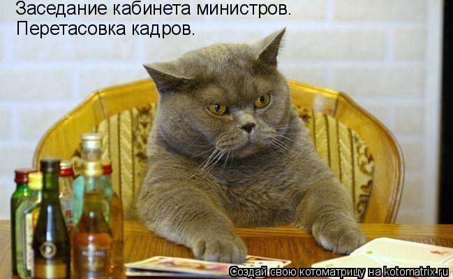 Котоматрица: Заседание кабинета министров. Перетасовка кадров.