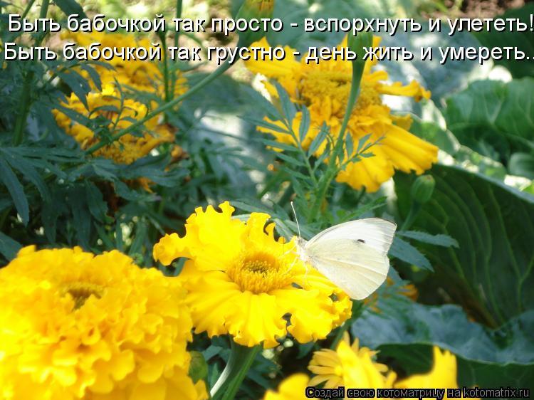 Котоматрица: Быть бабочкой так просто - вспорхнуть и улететь! Быть бабочкой так грустно - день жить и умереть..