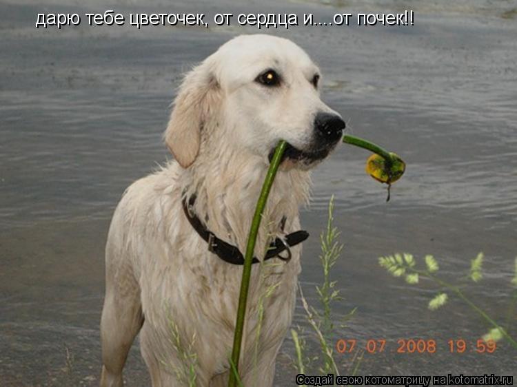 Котоматрица: дарю тебе цветочек, от сердца и....от почек!!