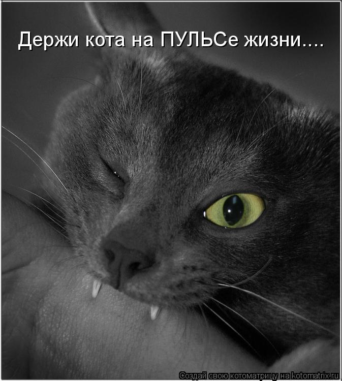 Котоматрица: Держи кота на ПУЛЬСе жизни....