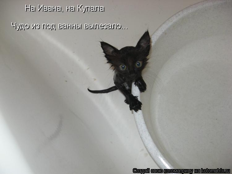 Котоматрица: На Ивана, на Купала Чудо из под ванны вылезало...