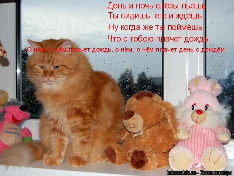 Котоматрица: День и ночь слёзы льёшь, Ты сидишь, его и ждёшь. Ну когда же ты поймёшь Что с тобою плачет дождь О нём, о нём плачет дождь, о нём, о нём плачет де