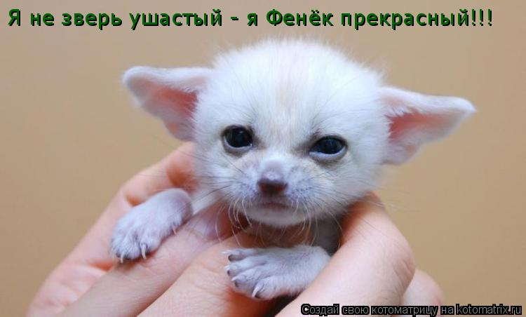 Котоматрица: Я не зверь ушастый - я Фенёк прекрасный!!!