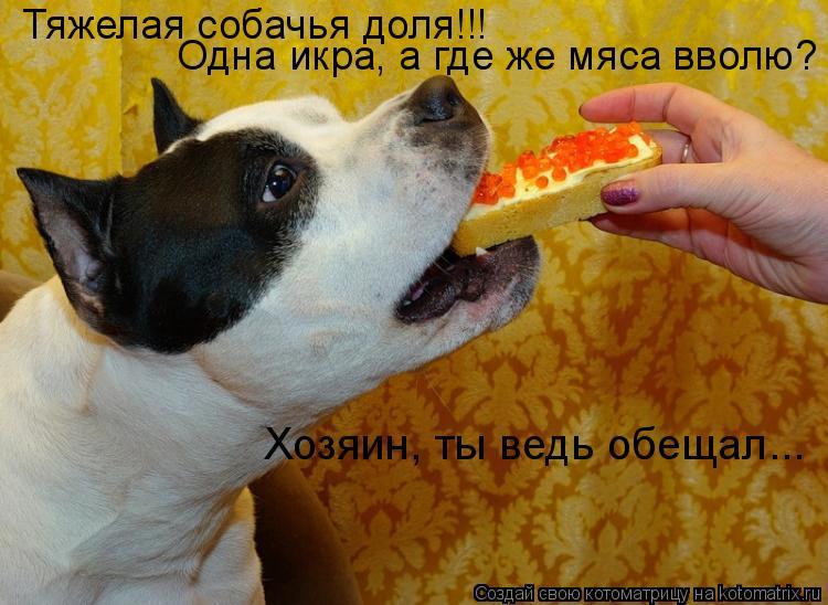 Котоматрица: Тяжелая собачья доля!!! Одна икра, а где же мяса вволю? Хозяин, ты ведь обещал...