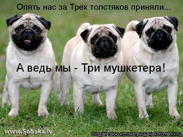 Котоматрица: Опять нас за Трех толстяков приняли... А ведь мы - Три мушкетера!