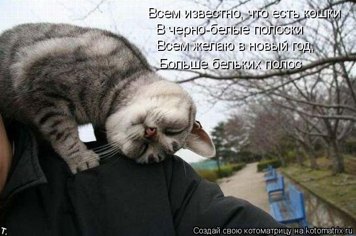 Котоматрица: Всем известно, что есть кошки В черно-белые полоски Всем желаю в новый год, Больше бельких полос