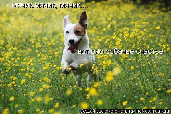 Котоматрица: - мячик,мячик, мячик.... вот оно собачье счастье