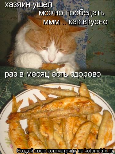 Котоматрица: хазяин ушёл  можно пообедать ммм... как вкусно раз в месяц есть здорово