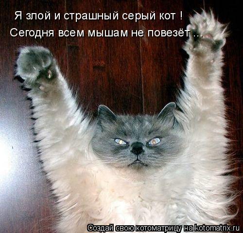 Котоматрица: Я злой и страшный серый кот !  Сегодня всем мышам не повезёт ...