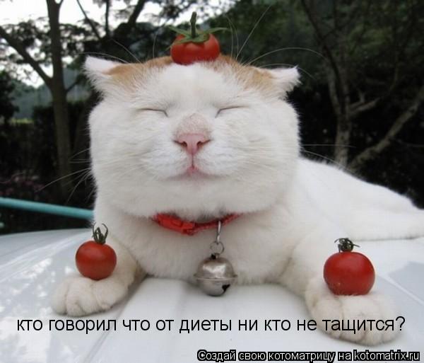 Котоматрица: кто говорил что от диеты ни кто не тащится?