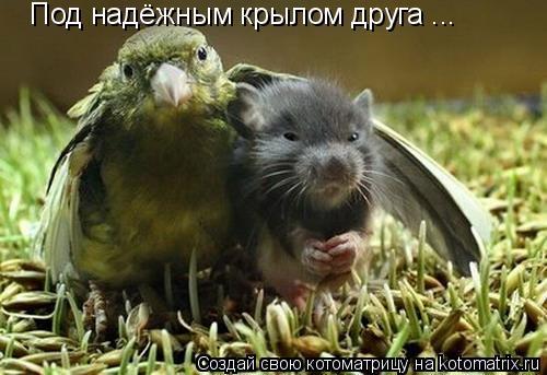 Котоматрица: Под надёжным крылом друга ...