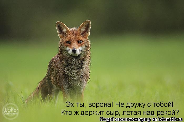 Котоматрица: Кто ж держит сыр, летая над рекой? Эх ты, ворона! Не дружу с тобой!