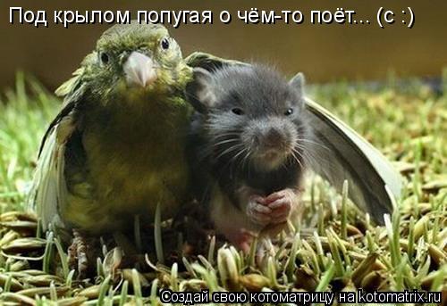 Котоматрица: Под крылом попугая о чём-то поёт... (с :)