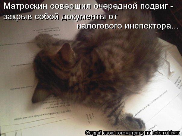 Котоматрица: Матроскин совершил очередной подвиг - закрыв собой документы от  налогового инспектора...