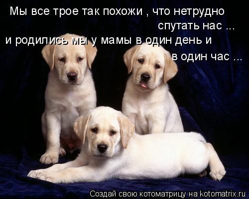 Котоматрица: Мы все трое так похожи , что нетрудно спутать нас ... и родились мы у мамы в один день и  в один час ...