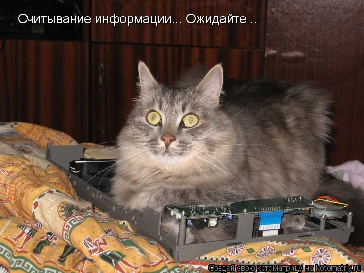 Котоматрица: Считывание информации... Ожидайте...
