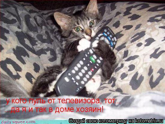 Котоматрица: у кого пуль от телевизора, тот... ...да я и так в доме хозяин!