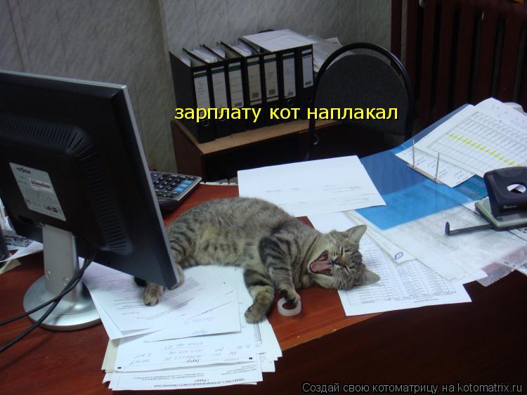Котоматрица: зарплату кот наплакал