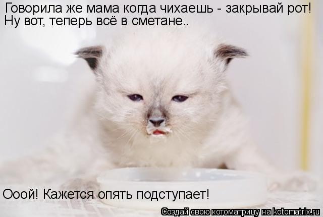 Котоматрица: Говорила же мама когда чихаешь - закрывай рот! Ну вот, теперь всё в сметане.. Ооой! Кажется опять подступает!