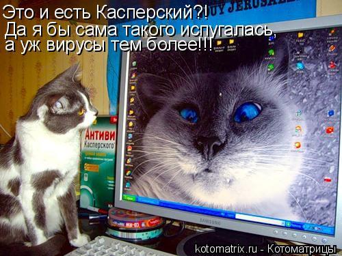 Котоматрица: Это и есть Касперский?! Да я бы сама такого испугалась,  а уж вирусы тем более!!!