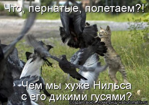 Котоматрица: Что, пернатые, полетаем?! Чем мы хуже Нильса  с его дикими гусями?