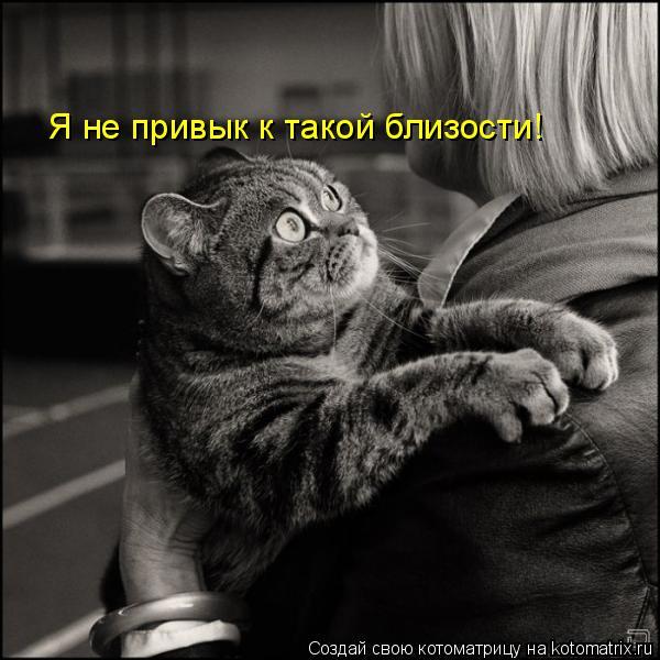Котоматрица: Я не привык к такой близости!