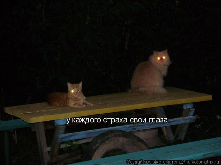 Котоматрица: у каждого страха свои глаза