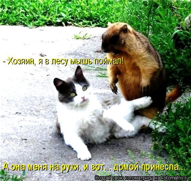 Котоматрица: - Хозяин, я в лесу мышь поймал! А она меня на руки, и вот... домой принесла...