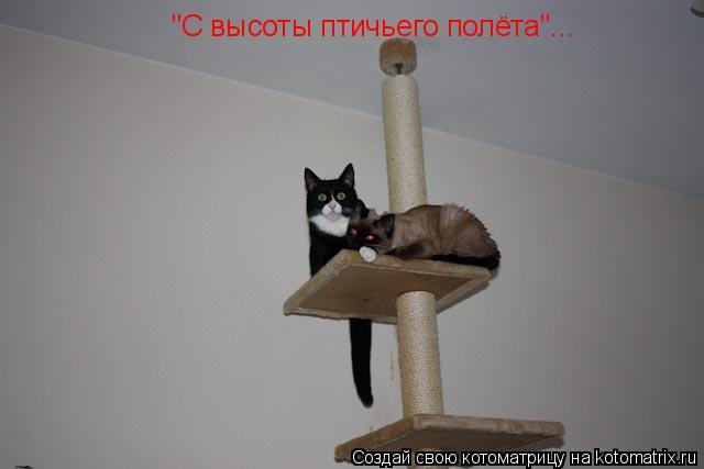 """Котоматрица: """"С высоты птичьего полёта""""..."""