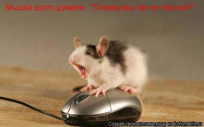"""Котоматрица: Мышка долго думала : """"Почему мы так не похожи?"""""""