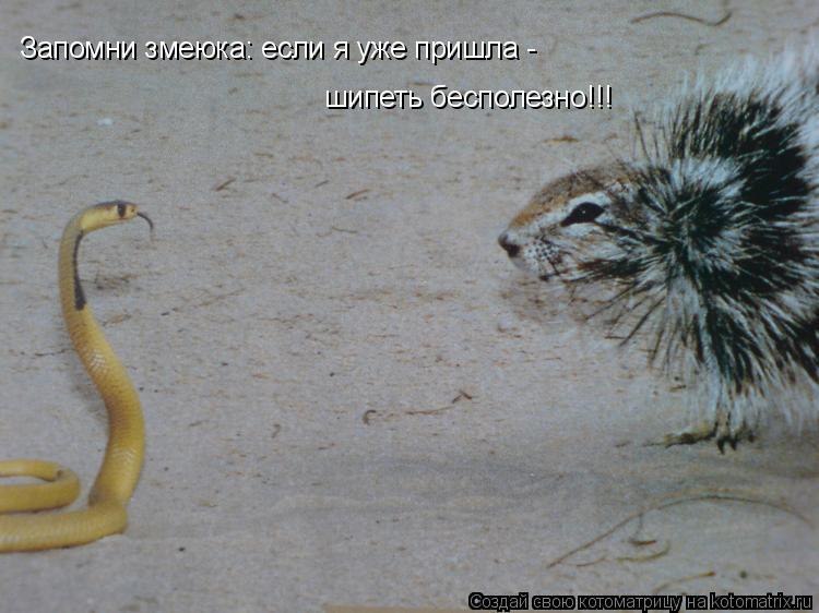 Котоматрица: Запомни змеюка: если я уже пришла - шипеть бесполезно!!!