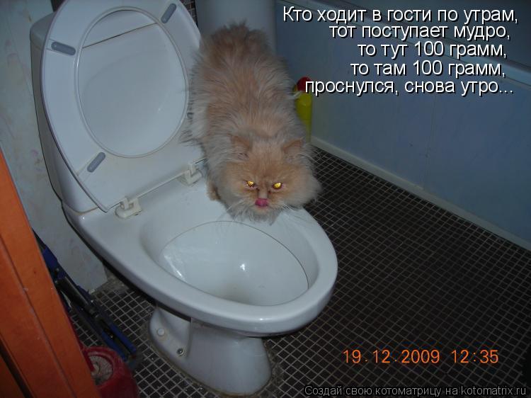 Котоматрица: Кто ходит в гости по утрам, тот поступает мудро, то тут 100 грамм, то там 100 грамм, проснулся, снова утро...