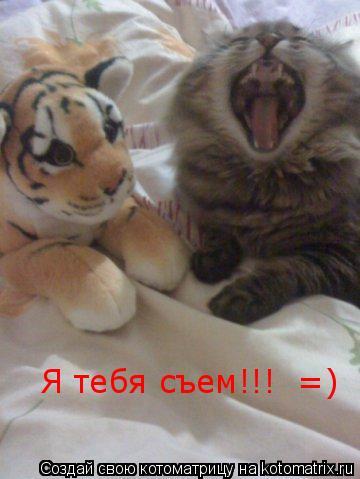 Котоматрица: Я тебя съем!!!  =)