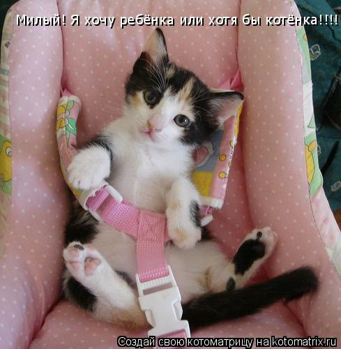 Котоматрица: Милый! Я хочу ребёнка или хотя бы котёнка!!!!!!