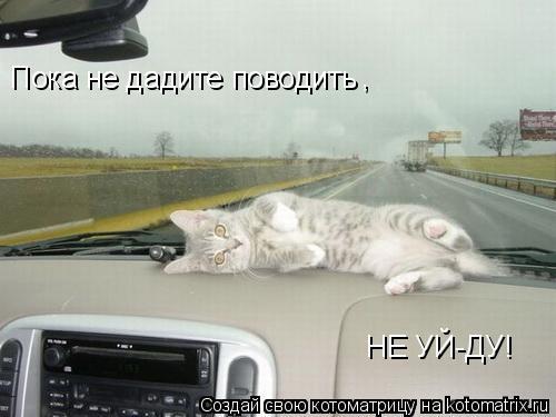 Котоматрица: Пока не дадите поводить , НЕ УЙ-ДУ!