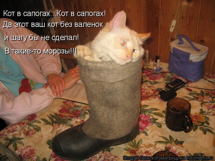 Котоматрица: Кот в сапогах...Кот в сапогах! Да этот ваш кот без валенок и шагу бы не сделал!  В такие-то морозы!!!