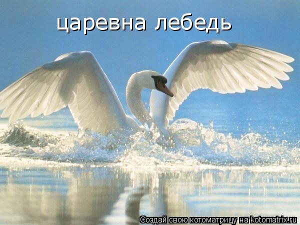 Котоматрица: царевна лебедь