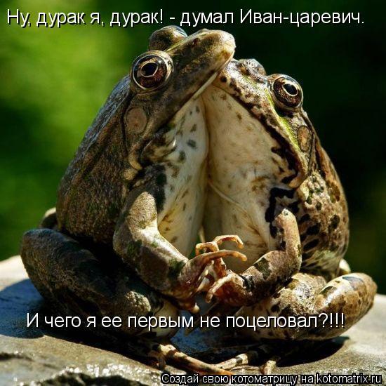 Котоматрица: Ну, дурак я, дурак! - думал Иван-царевич. И чего я ее первым не поцеловал?!!!