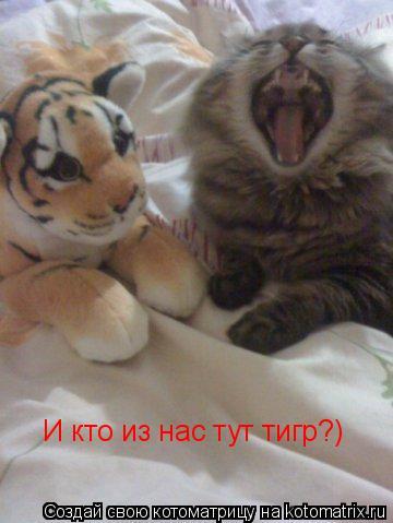 Котоматрица: И кто из нас тут тигр?)