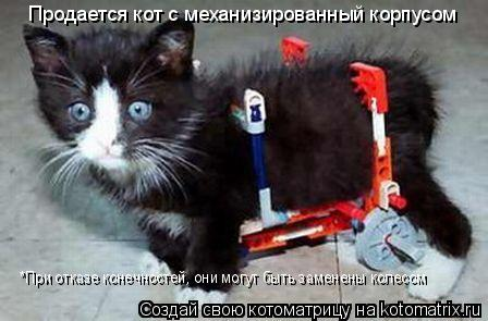Котоматрица: Продается кот с механизированный корпусом *При отказе конечностей, они могут быть заменены колесом