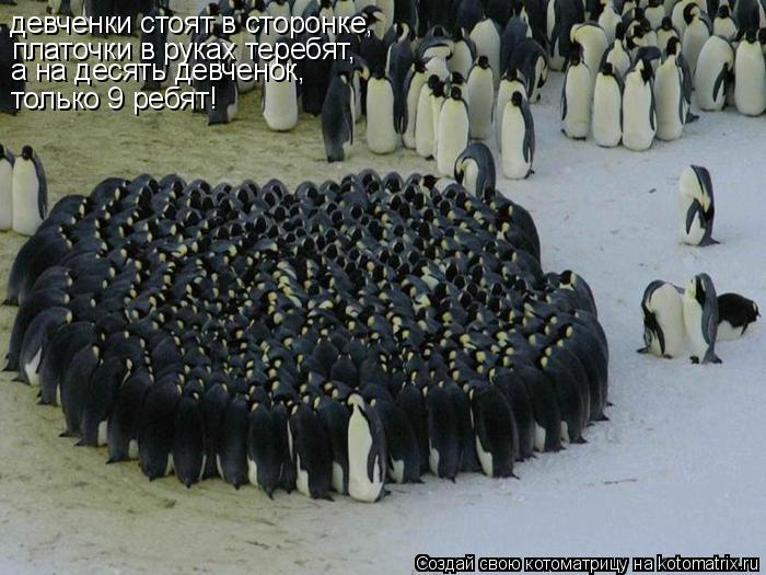 Котоматрица: девченки стоят в сторонке,  платочки в руках теребят, а на десять девченок, только 9 ребят!