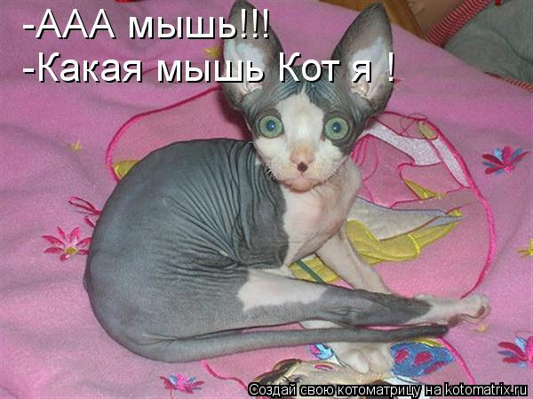 Котоматрица: -ААА мышь!!! -Какая мышь Кот я !