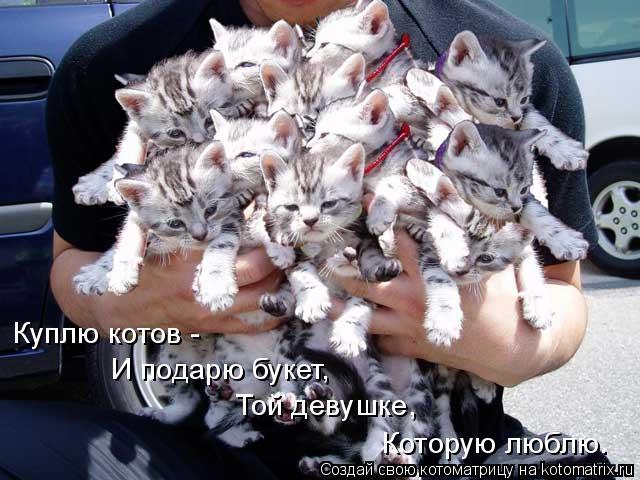 Котоматрица: Куплю котов -   И подарю букет,  Той девушке, Которую люблю.