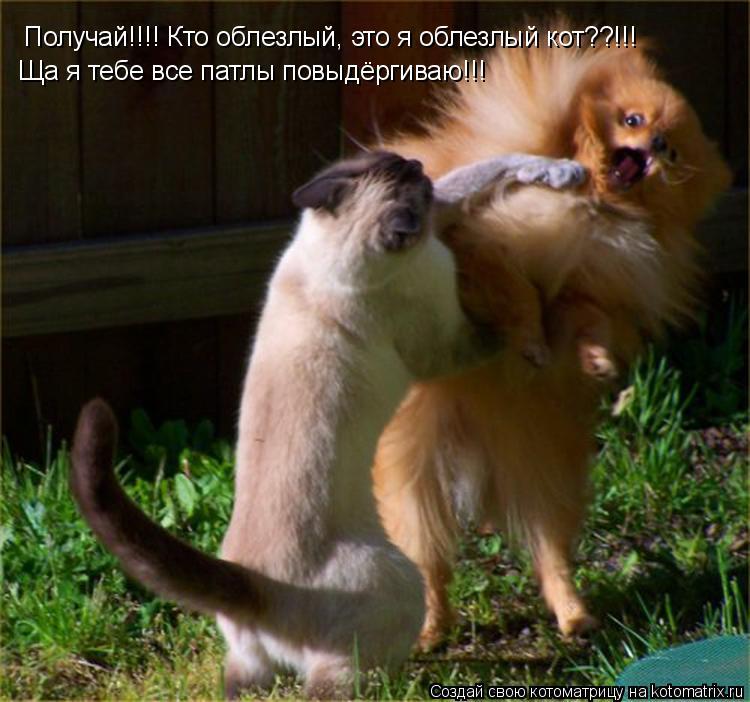 Котоматрица: Получай!!!! Кто облезлый, это я облезлый кот??!!! Ща я тебе все патлы повыдёргиваю!!!