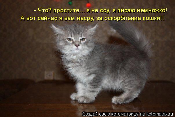 Котоматрица: - Что? простите... я не ссу, я писаю немножко! А вот сейчас я вам насру, за оскорбление кошки!!