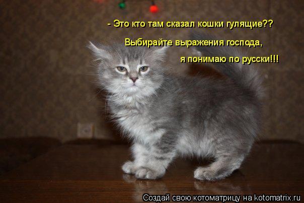 Котоматрица: - Это кто там сказал кошки гулящие?? Выбирайте выражения господа, я понимаю по русски!!!