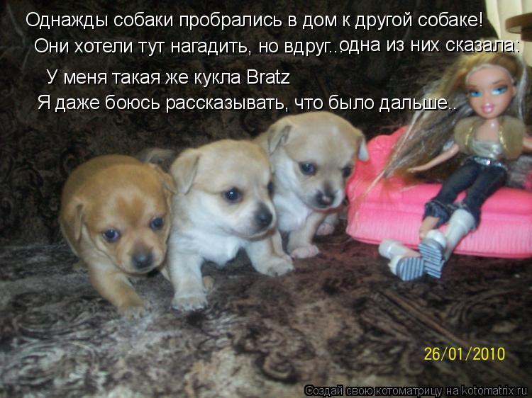 Котоматрица: Однажды собаки пробрались в дом к другой собаке! Они хотели тут нагадить, но вдруг... одна из них сказала: У меня такая же кукла Bratz Я даже боюс