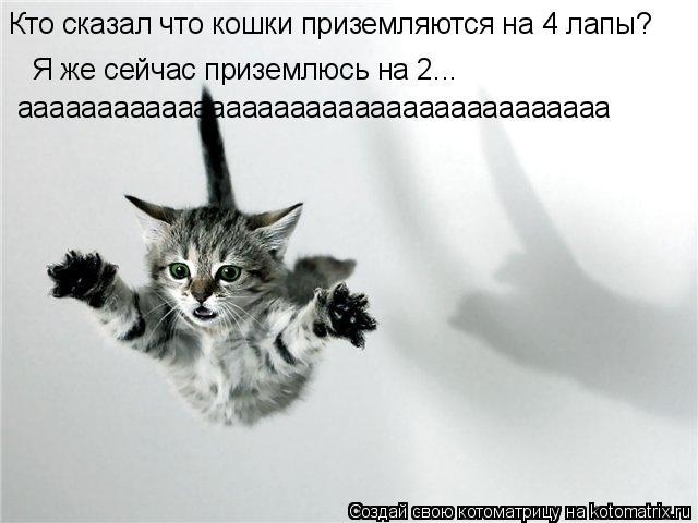 Котоматрица: Кто сказал что кошки приземляются на 4 лапы? Я же сейчас приземлюсь на 2... ааааааааааааааааааааааааааааааааааааа